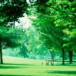 People Who Live In Green Environs Less Likely To Suffer From Health Problems