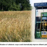 Ethanol is the Future In Bio Fuel