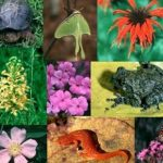 UK Is Stepping Forward To Support Biodiversity
