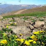 Invasive Species Threaten The Mountain Flora
