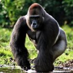 The Humanity's Behavior Is The Key Factor In Preserving Endangered Species