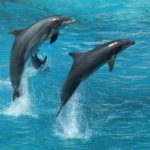 Dolphins Are Witnessing The Health Of Our Planet