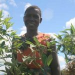 Malawi Is Going Back To Good Old Green Farming