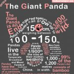 Cuddle The Giant Panda