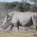 Rhino Wars Update