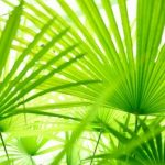 Discarded Palm Leaves for Waste Water Treatment