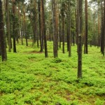 Calcium - The Solution to Save Forests Damaged By Acid Rain