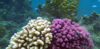 Corals are Able to Fight the Ocean Pollution