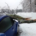 How to Prevent Storm Damaged Tree Accidents?