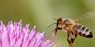 harmful effects of pesticides on bees