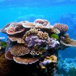 things you can do to save coral reefs