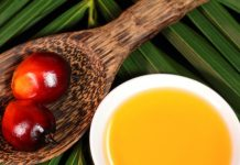 negative effects of palm oil on our environment