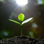 What are the Best Ways to Conserve Soil