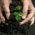 The Harmful Effects of Fertilizers on the Environment