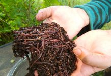 Six benefits of vermicomposting that you should know