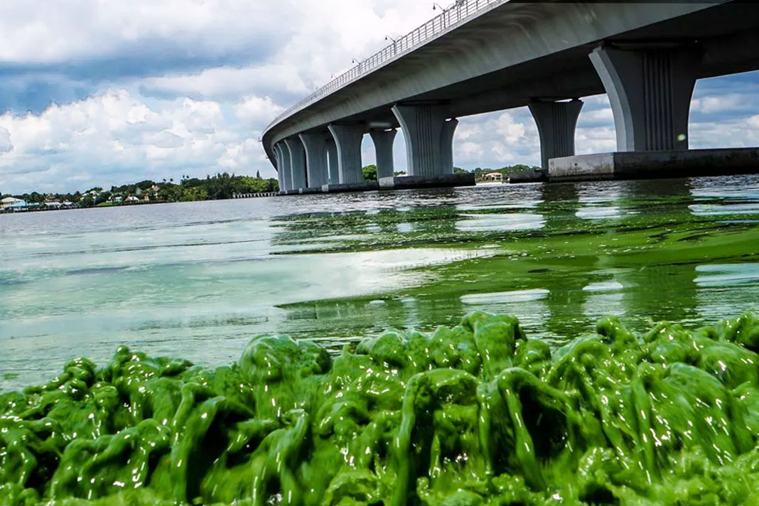 effects of eutrophication on environment