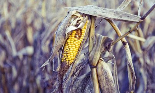 Climate Change and Food Price
