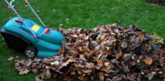 Composting Leaves and How to Do It