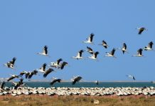 how does climate change affects bird migration