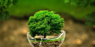 Seven Different Ways to Celebrate the Earth Day