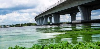 Effects-of-Eutrophication-on-Environment