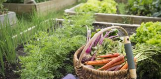 Benefits of Having a Kitchen Garden